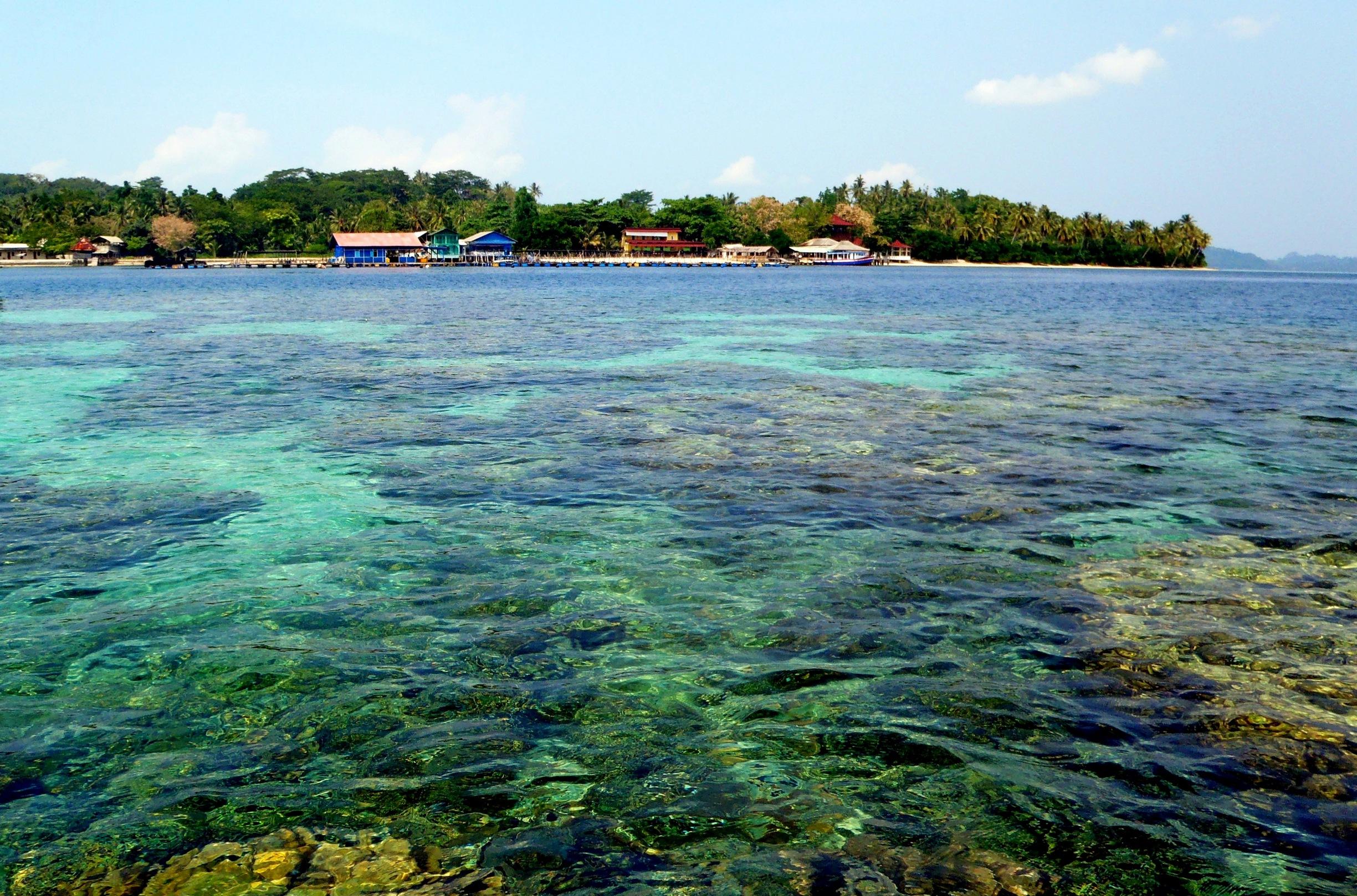 Pesona Bakau Terumbu Karang Di Pulau Pahawang Lampung